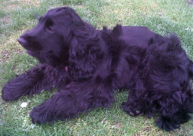 Dog Training Cumbernauld